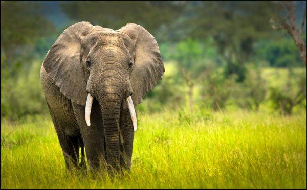 Beauty-Of-Uganda-8